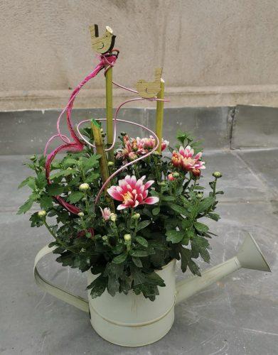 Lila Chrysantheme